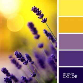 Комбинация от цветове в природата