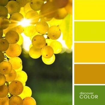 Цветовете в природата грозде