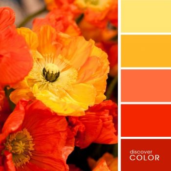 Цветовете в природата мак
