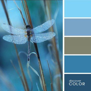 Цветовете в природата водно конче