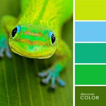 Цветовете в природата жаба