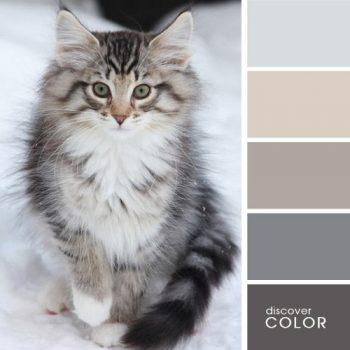 Цветовете в природата котка