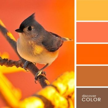 Цветовете в природата птица