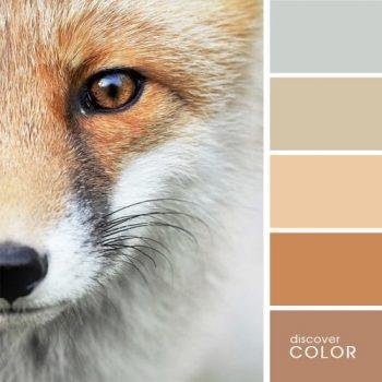 Цветовете в природата лисица