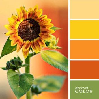 Цветовете в природата слънчоглед