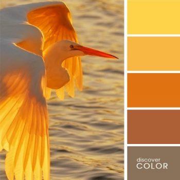 Цветовете в природата чапла