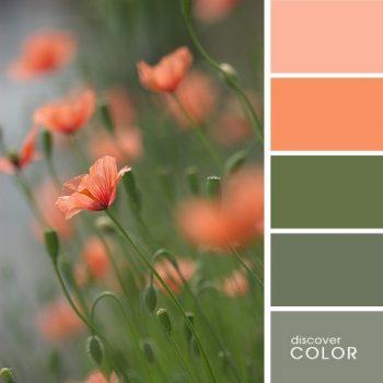 Цветовете в природата цветя