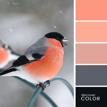 Цветовете в природата синигер