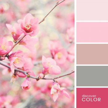 Цветовете в природата череша