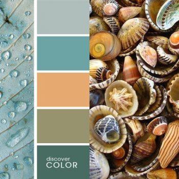 Цветовете в природата